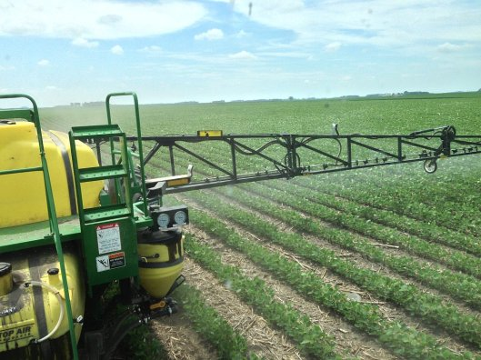 Spraying-Roundup-on-beans-3